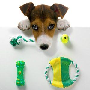 Conjunto  Brinquedos Para Cães 4 Peças