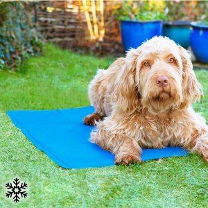 Tapete Refrescante Para Animais de Estimação | Ajuda o Seu Animal a Diminuir a Temperatura Corporal