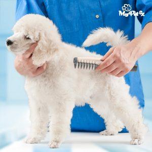 Pente Elétrico Corta Nós Para Cães Comb & Cut