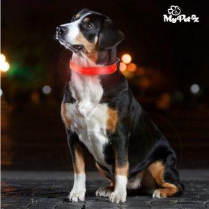 Collar Para Perro LED My Pet EZ