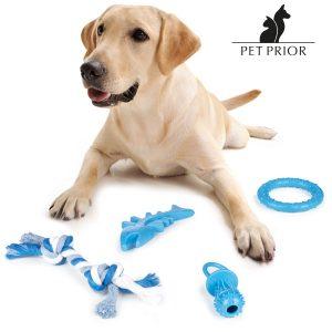 Brinquedos Para Cães | Pack de 4 Unidades