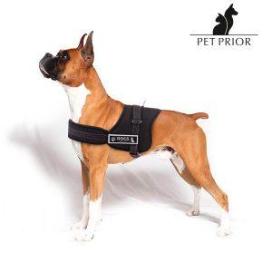 Arnês Ajustável Para Cães Pet Prior