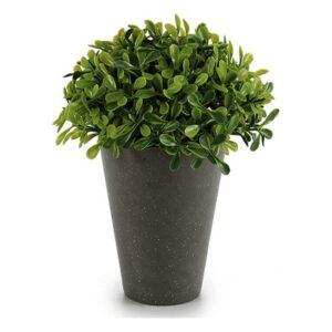 Planta Decorativa Ibergarden (13 x 17 x 13 cm) Plástico