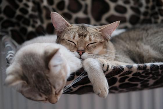 Gatos - Camas - Casas - Arranhadores - Brinquedos